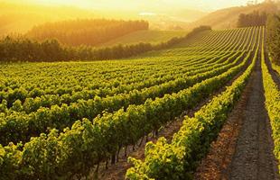 200701311328340.Wine-Regions